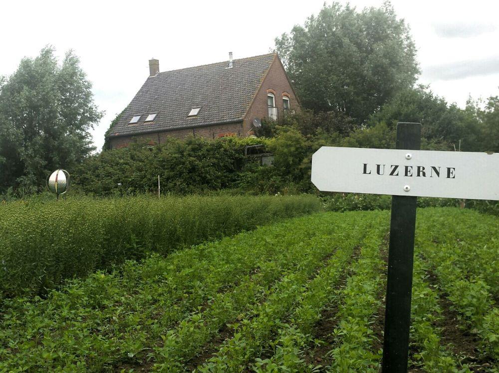 Tiengemeten Luzerne
